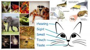 প্রাণিকুলের ইন্দ্রিয়শক্তি : Sense of Animals (Learn Basic Biology Part 01)